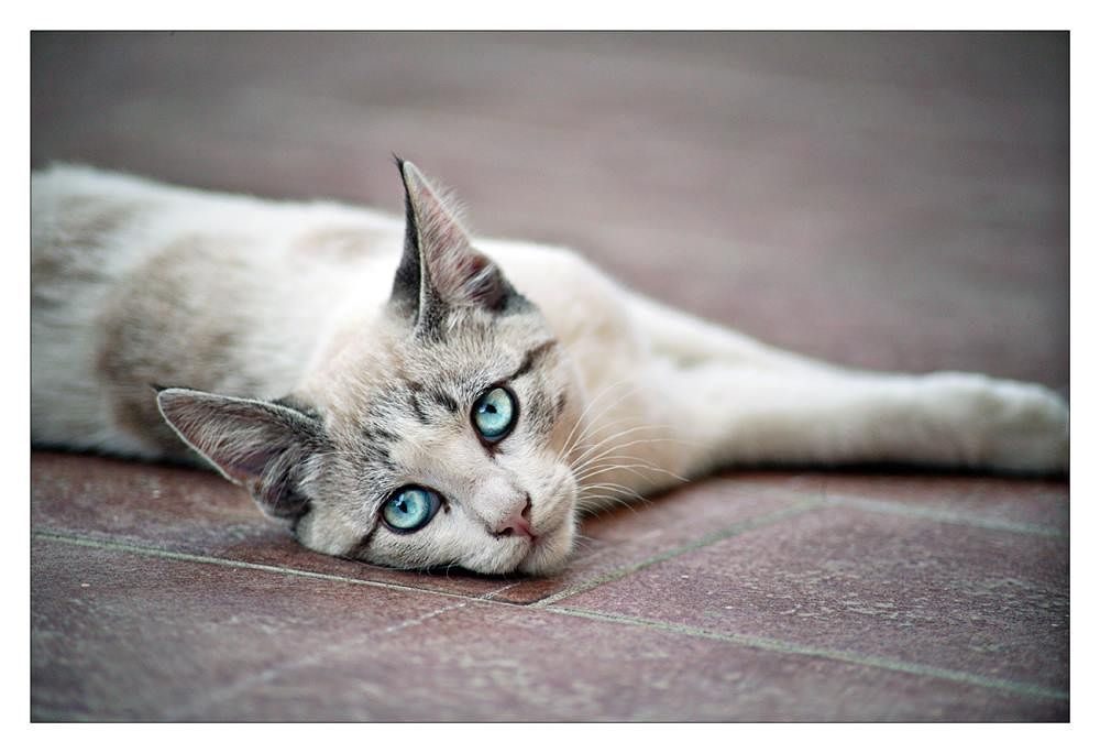 gattina.jpg by rossanofaltoni