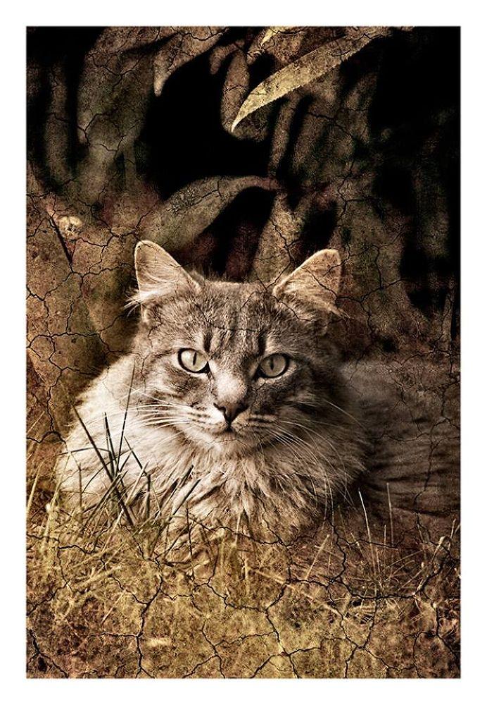 cat by rossanofaltoni