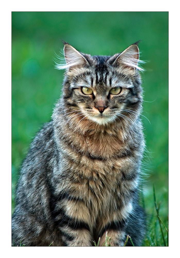 The cat by rossanofaltoni