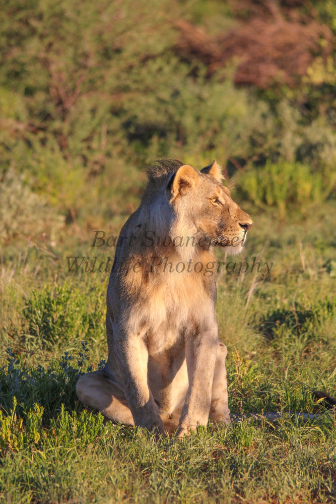 young male looking into the future by Bart Swanepoel