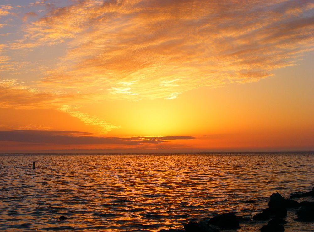 Gulf Coast, Florida , USA by JUDITH HORN