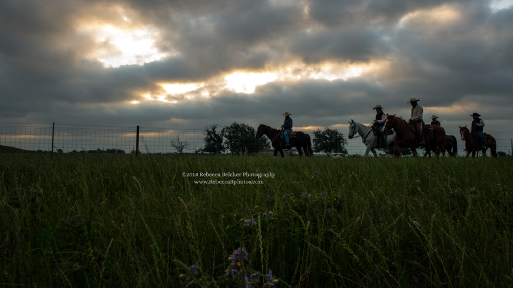 Cowboys at Sunrise - Cattle Ranch - Schwertner - Texas - www.RebeccaBphotos.com by Rebecca Belcher Photography