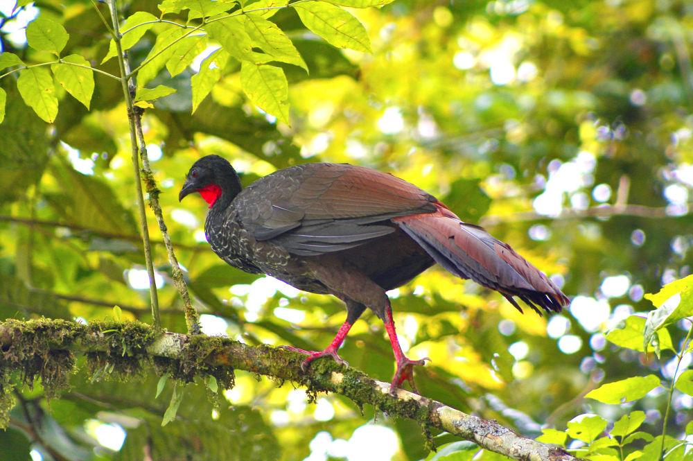 big bird. by Carlos Giovanni Rodriguez Chiluiza