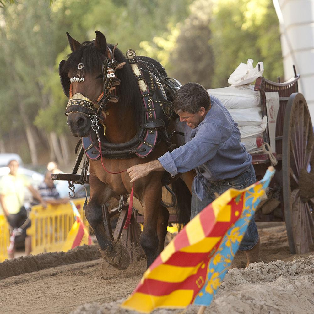 Photo in Sports #campeonato de tiro y arrastre