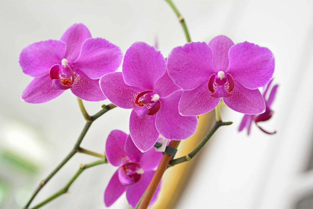 Orchids  by Newyorkexposure