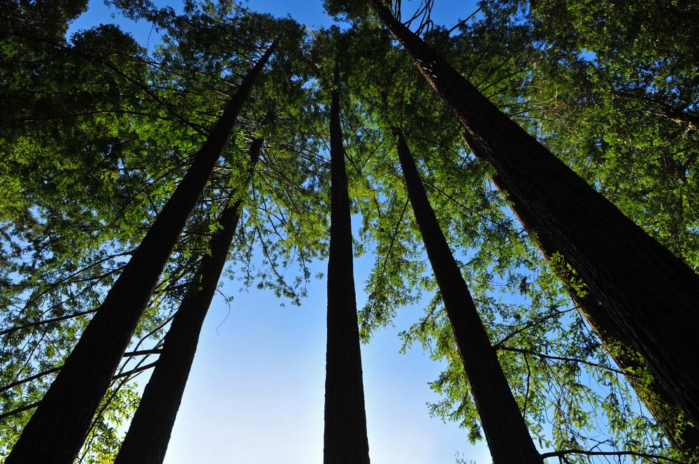 Sequoia Forest, CA by Newyorkexposure