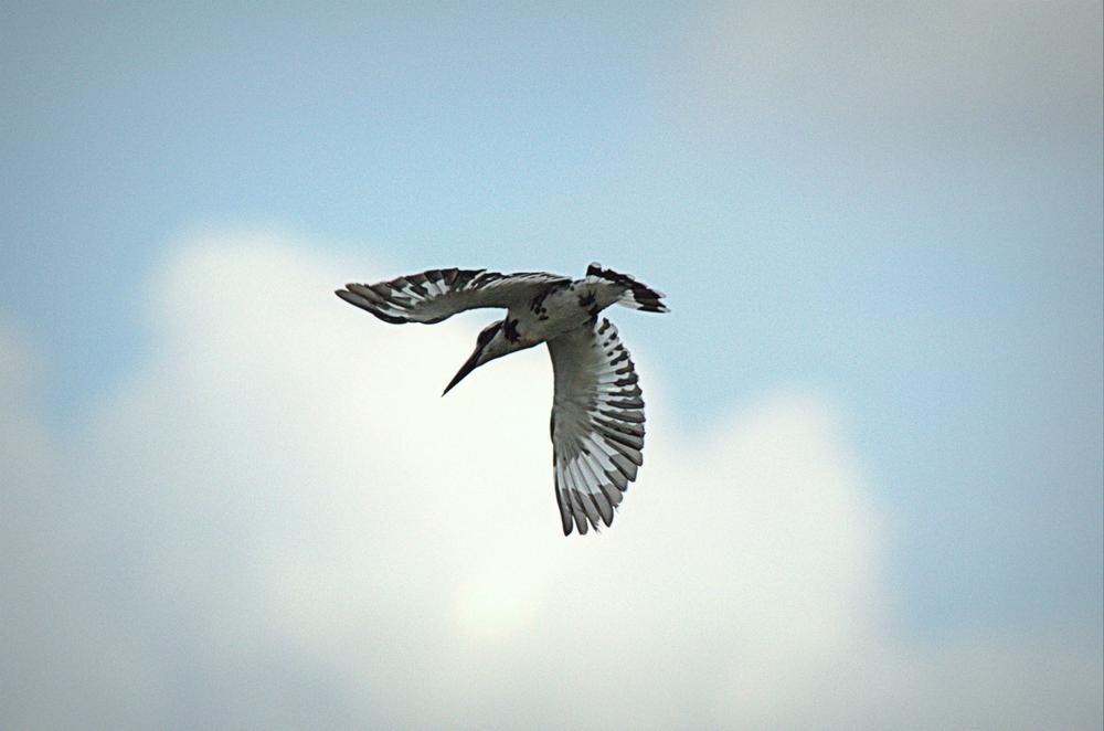 Flying spur by Saravana Kumar