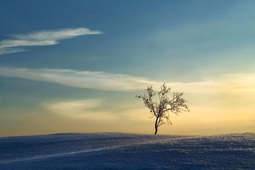 puu lumessa kopioi by Jorma Hevonkoski