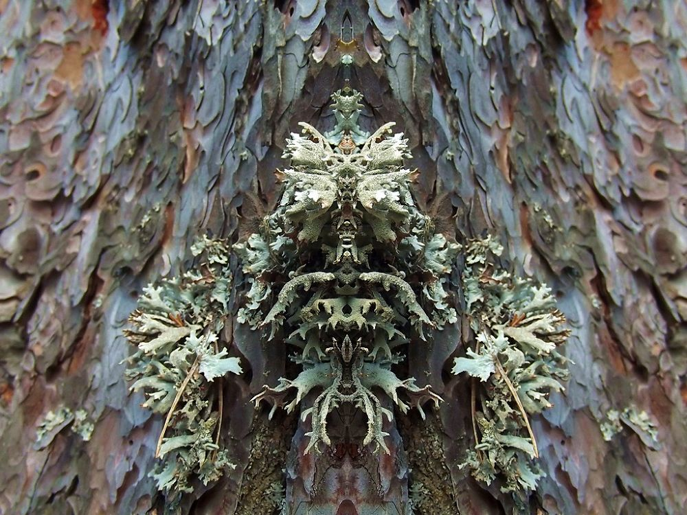 Mirror Effect by brhmtl