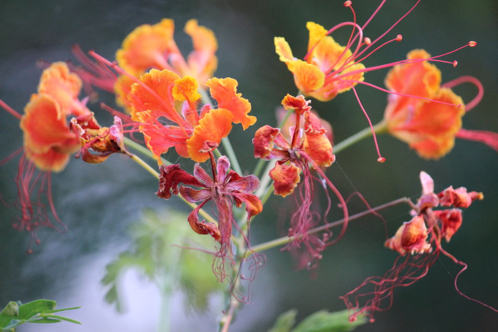 beauty of nature by Avantika Lal