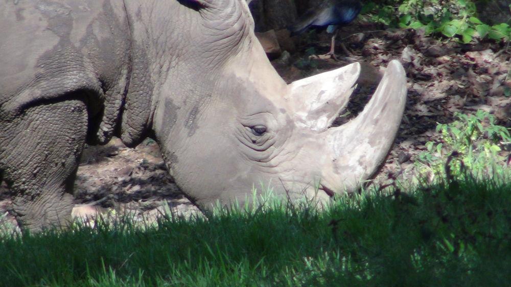 Rhino ( Mysore ) by satyamsri8