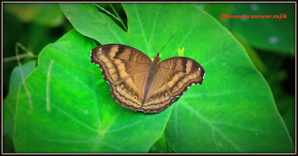 Butterfly..!!!! by rajib5683