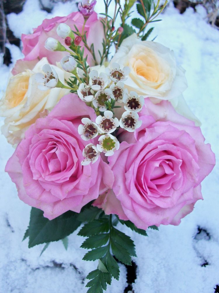 Roses on Snow by NatalyaParris