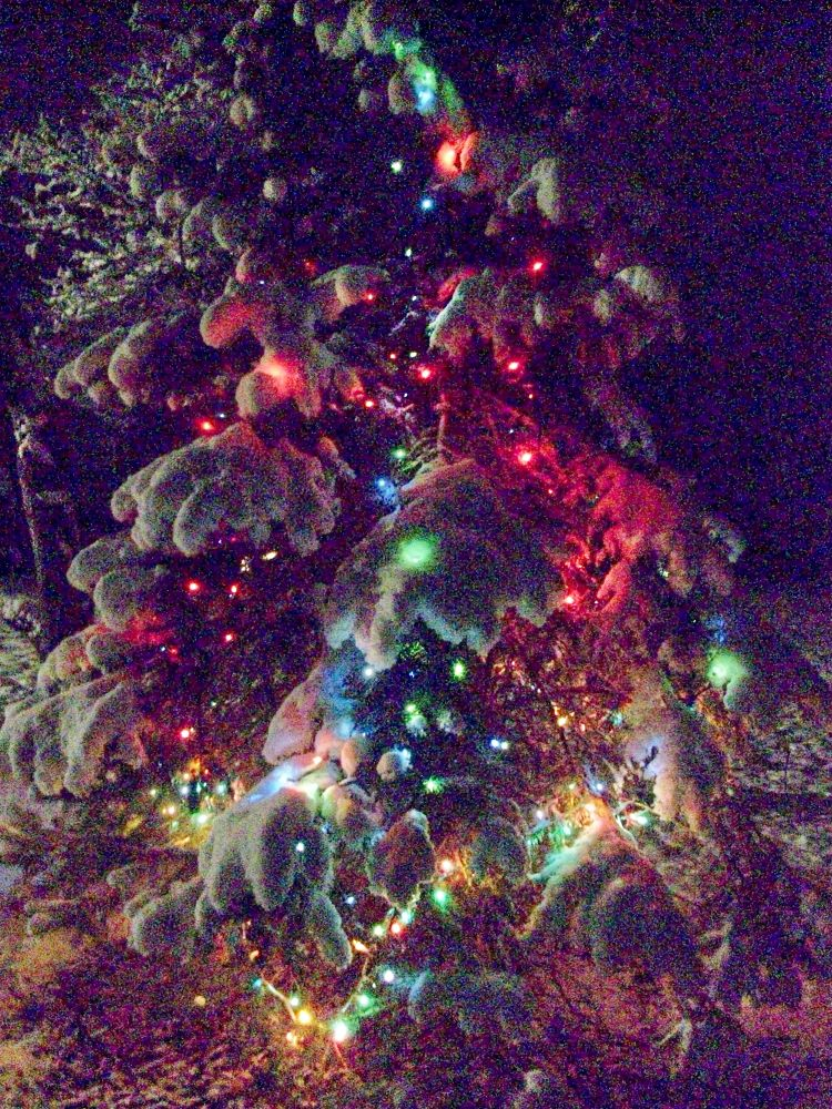 Christmas tree in my garden; Gaithersburg MD USA, January 2, 2014 at 10:45 PM by NatalyaParris
