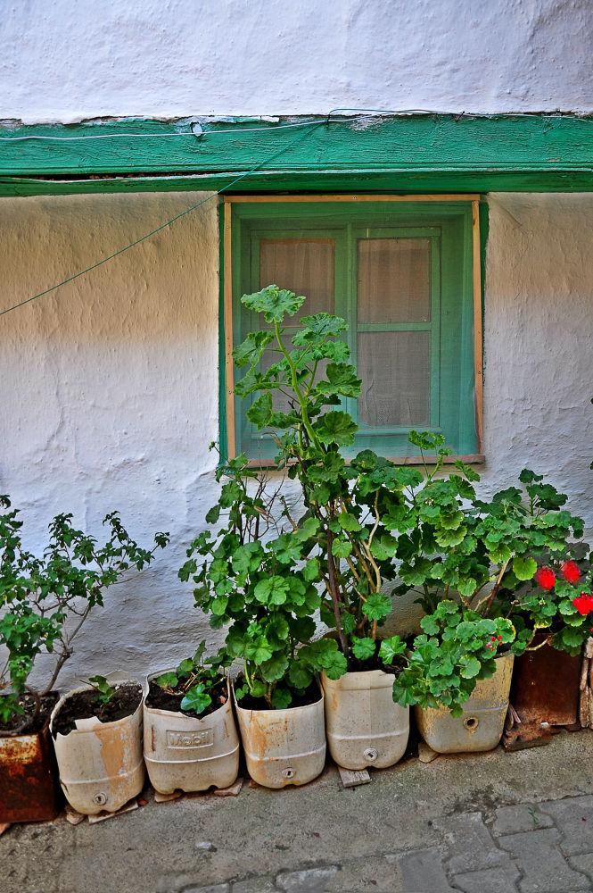 green window by fatmagokmen64