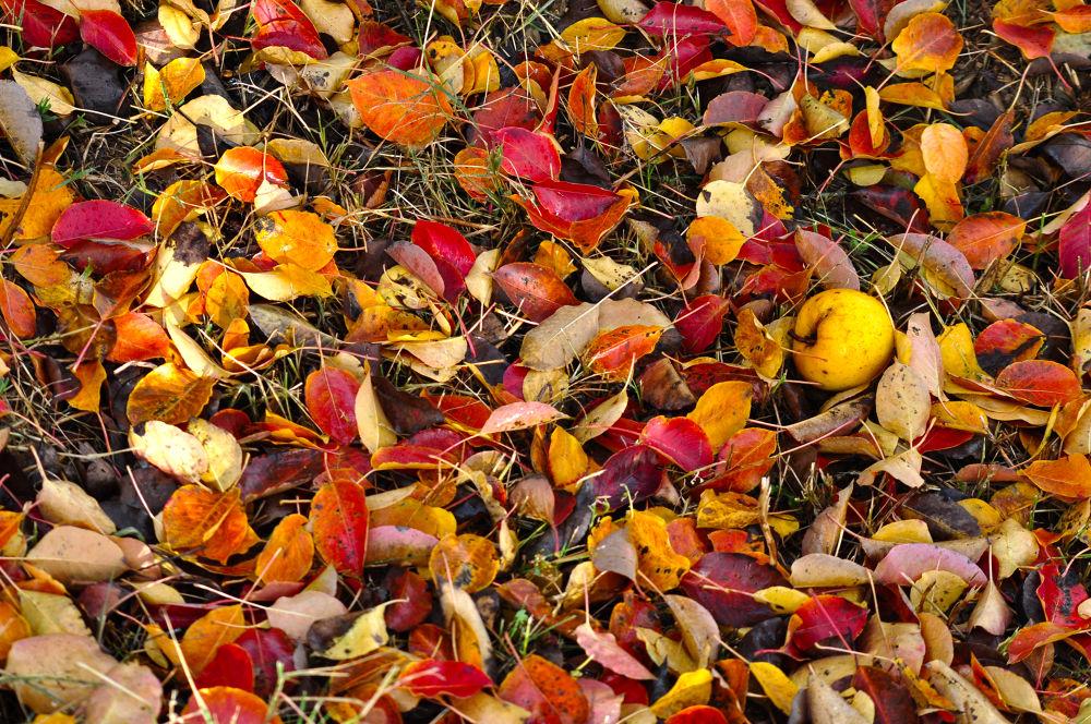 Autumn by fatmagokmen64