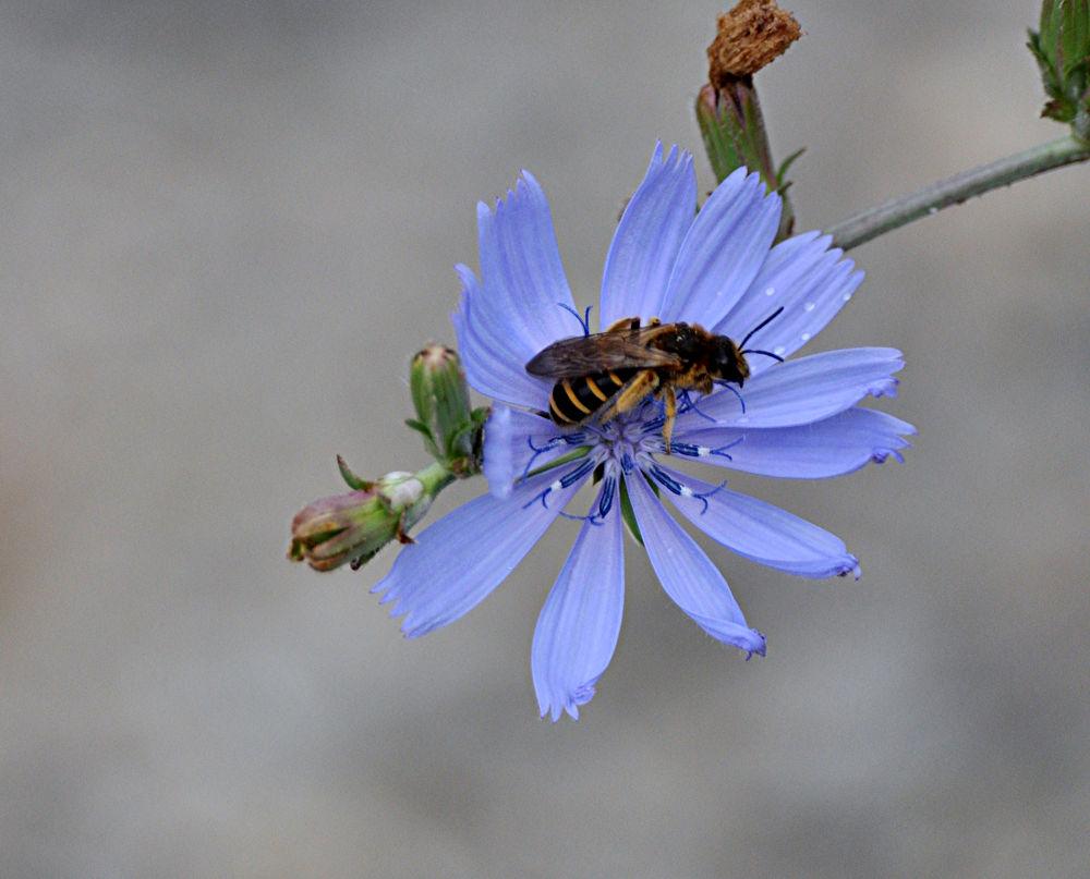 bee... by fatmagokmen64