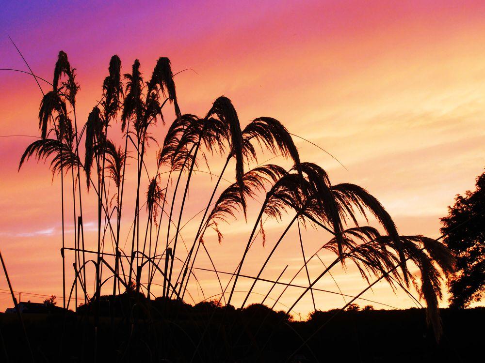 sunset by John Arthur