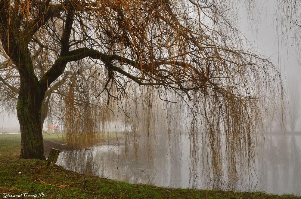 Photo in Nature #lago #lake #ortucchio #italia #abruzzo #natura #albero #nebbia