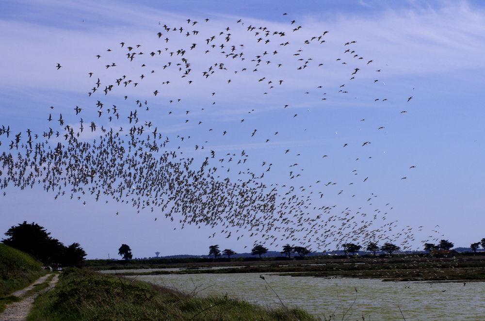 Birds... by Philippe Caumont