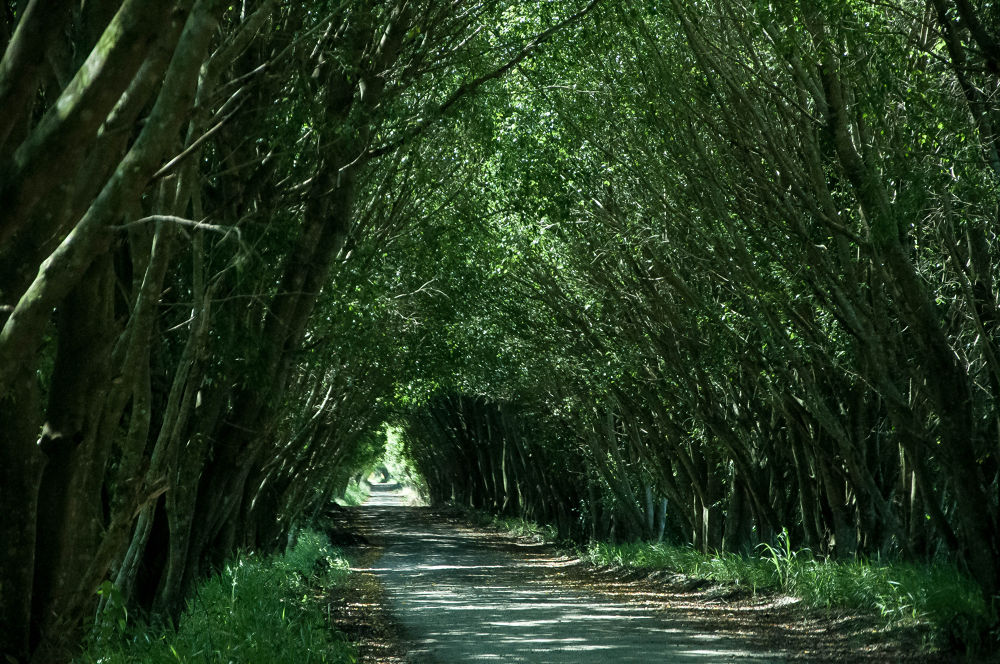 Caminho verde by Marcant