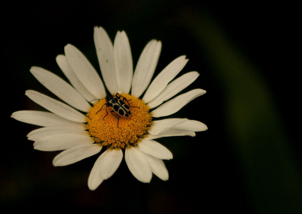 Flor e inseto by Marcant