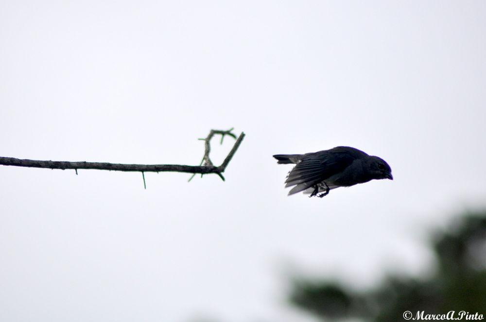 Photo in Nature #ave #sanhao cinzento #pssaro
