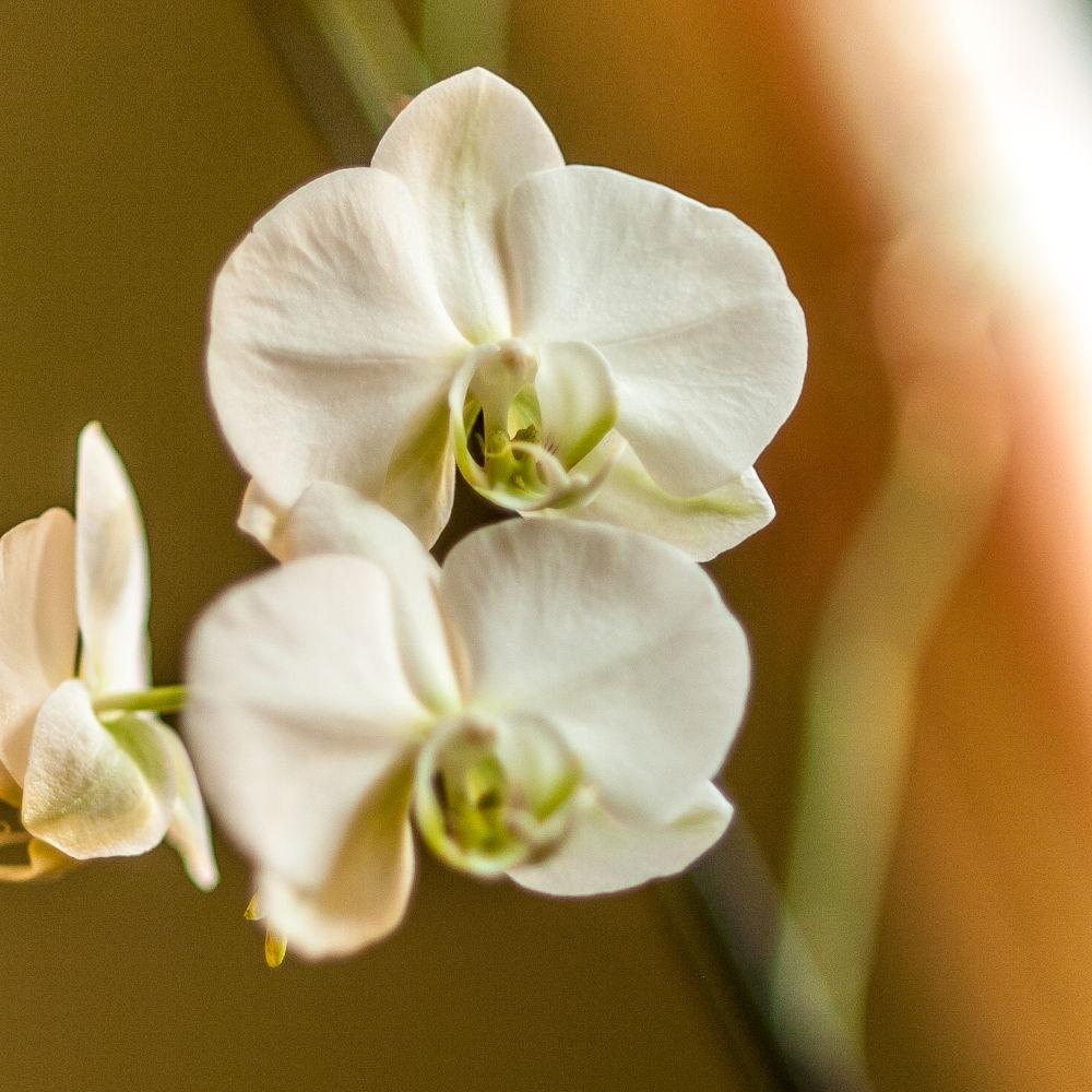 03022013- orchidés.. by photosdan