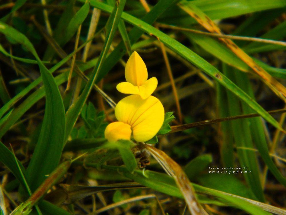 Photo in Random #beautiful #flower