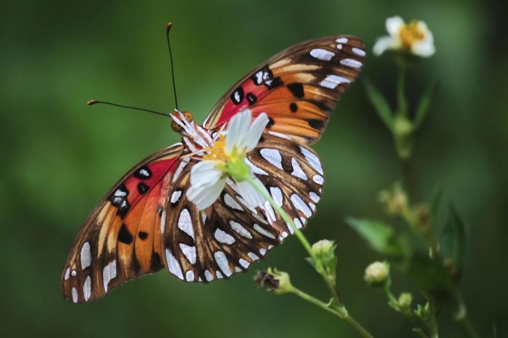 Butterflies (6) by Jorge Coromina