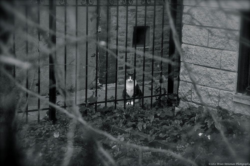 Photo in Black and White #cat #cats #fall #black and white #fence