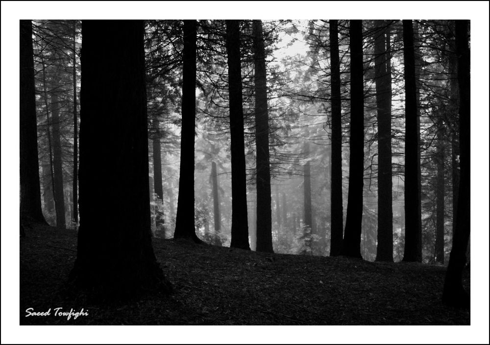 Photo in Nature #white #black #nature #tree #forest #england