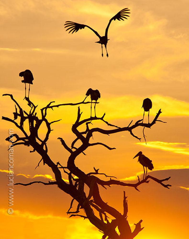 sunset by poco_bw