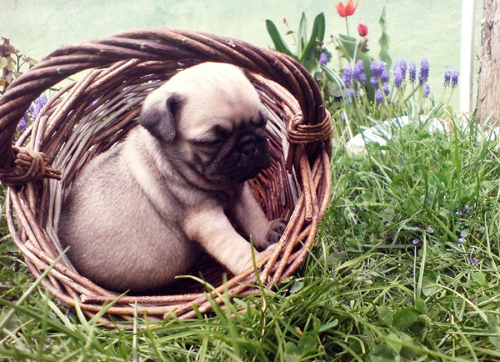 dog in the basket by Belladonna Lullaby