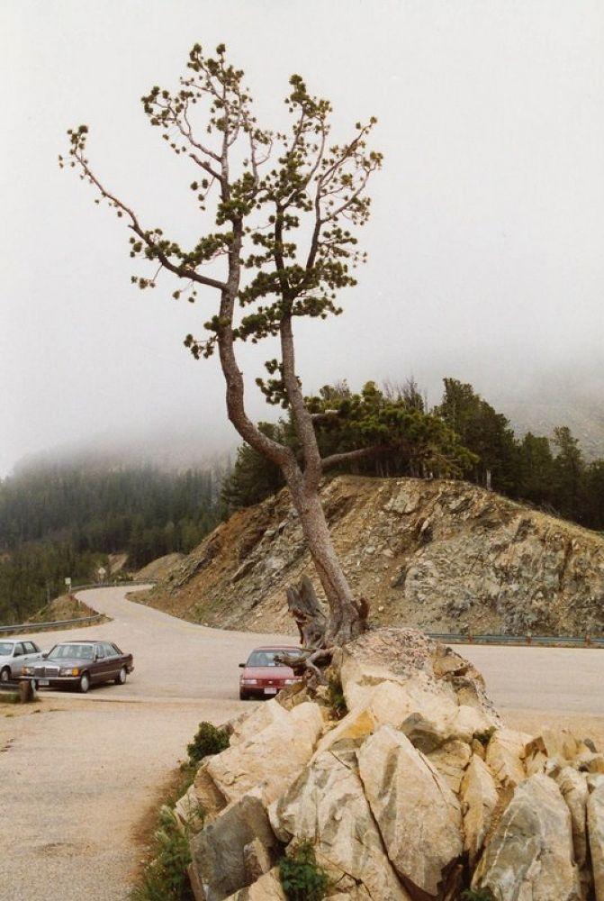 3.USA_Montana_1994-103 by Arie Boevé