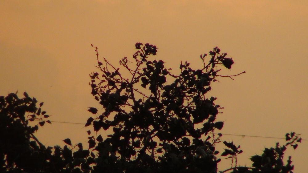 Lashing by the Winds !!! by satyamsri8