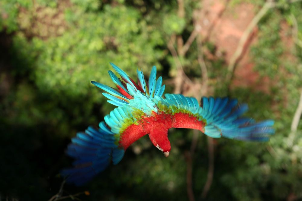 Red Macaw by itamarcampos927