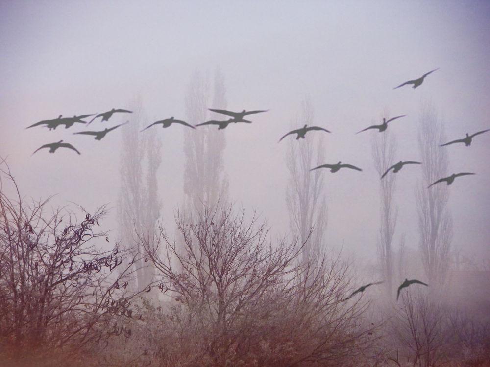 Birds in the mist.. by tanjica