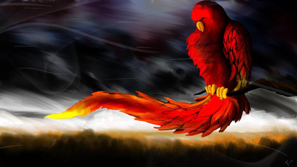 parrot by Abid Ali