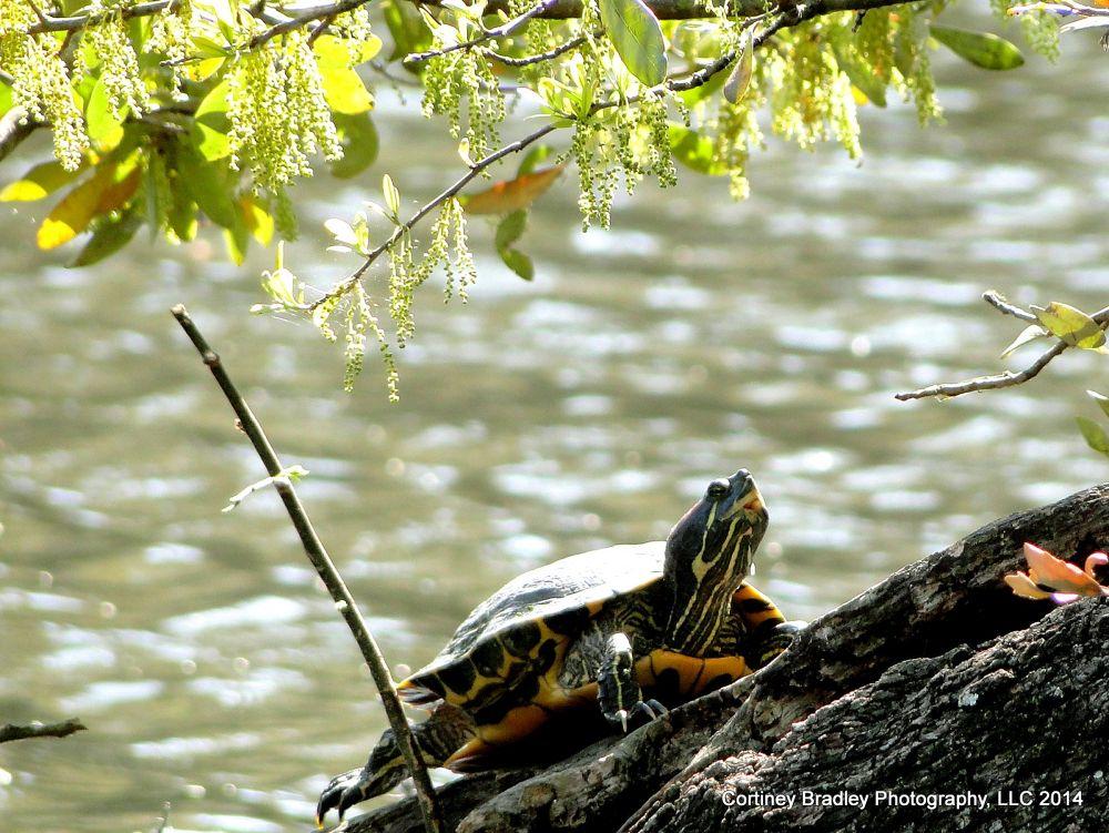Joyful turtle - New Orleans, LA by cortineybradleyphotography