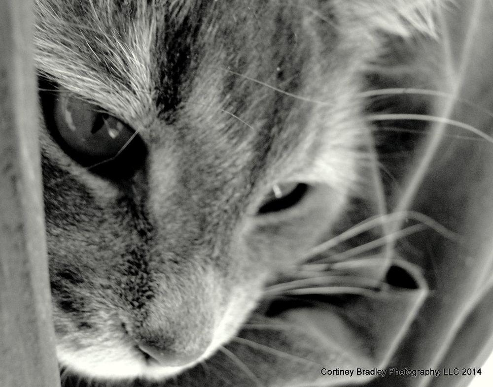 Mew. by cortineybradleyphotography