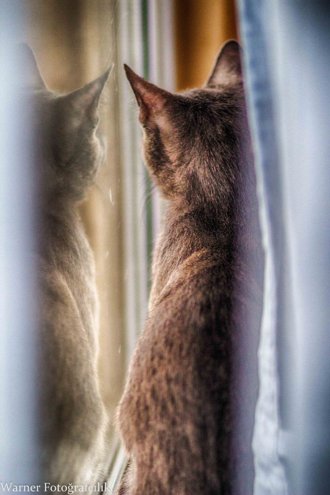 Watching the birds... by Stephen Warner