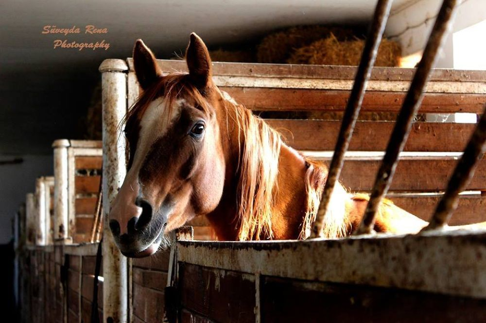 horse by Rena Mustafazade