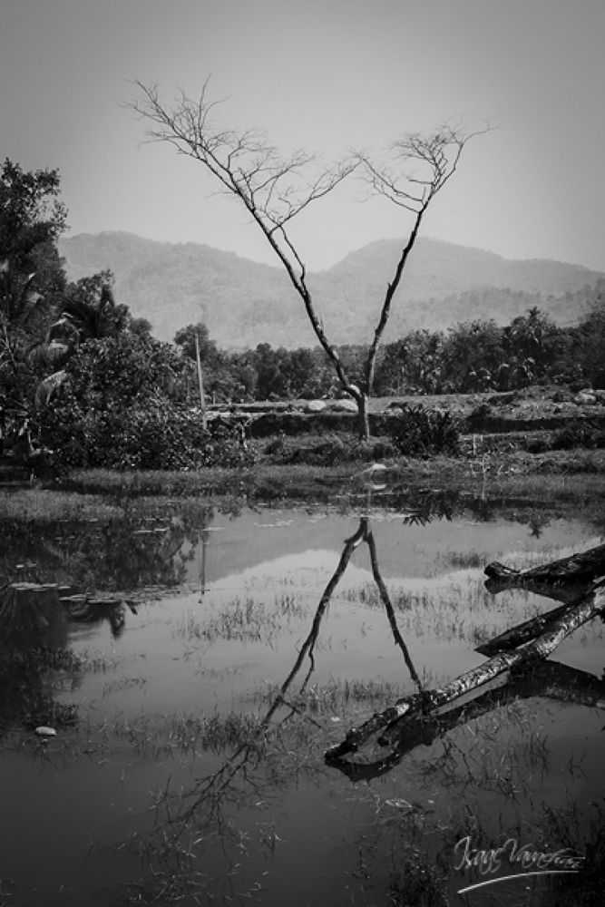 Reflection of the dry one. by Isaac Vavachan