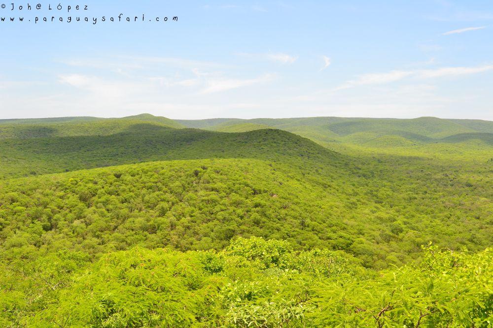 Cerro León - Paraguayan Dry Chaco by ParaguaySafari