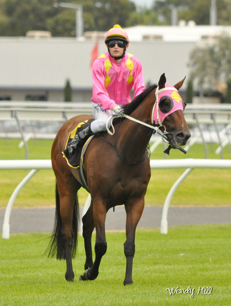 Jockey Craig Newitt - Adelaide Cup Day 2014 by Wendy Hill
