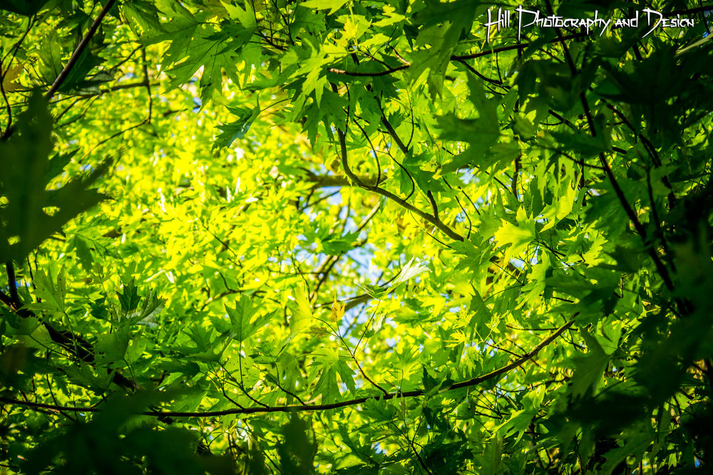 Greenness by Simon Hill