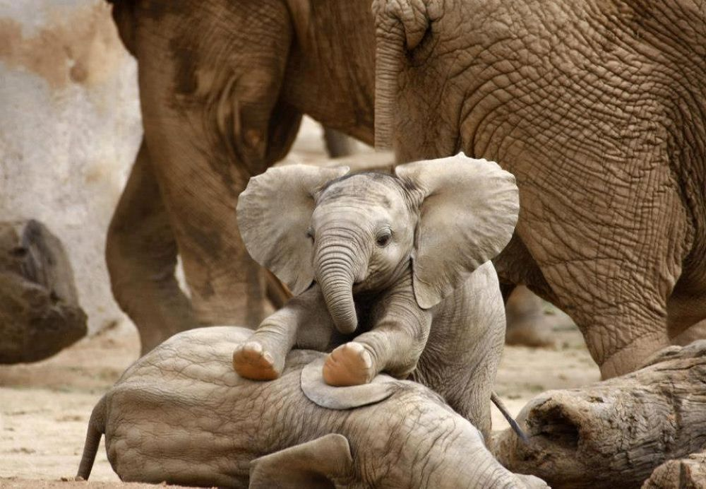 Cute_baby_elephant by Lalit