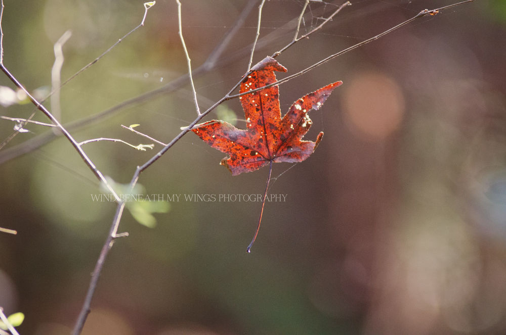 Hanging on  by Candy Evans-Sappington