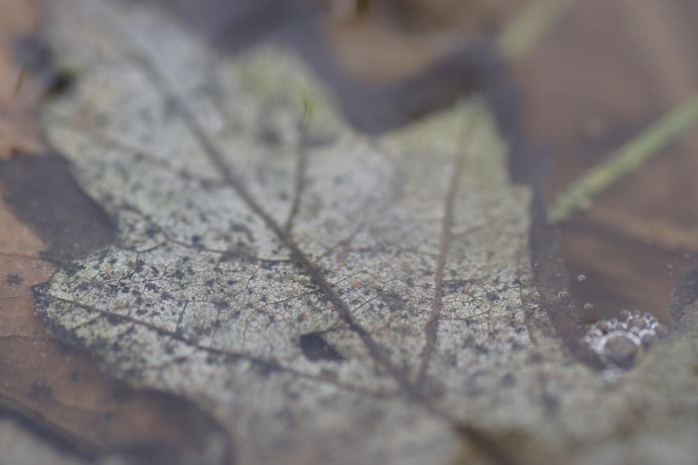 Photo in Random #leaves